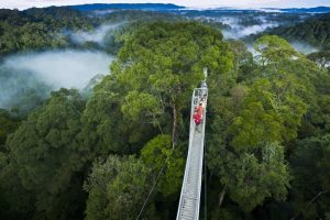 ulu_temburong_nationalPark