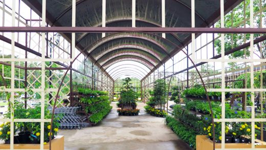 Calling All Green Thumbs To Rimba Garden Central